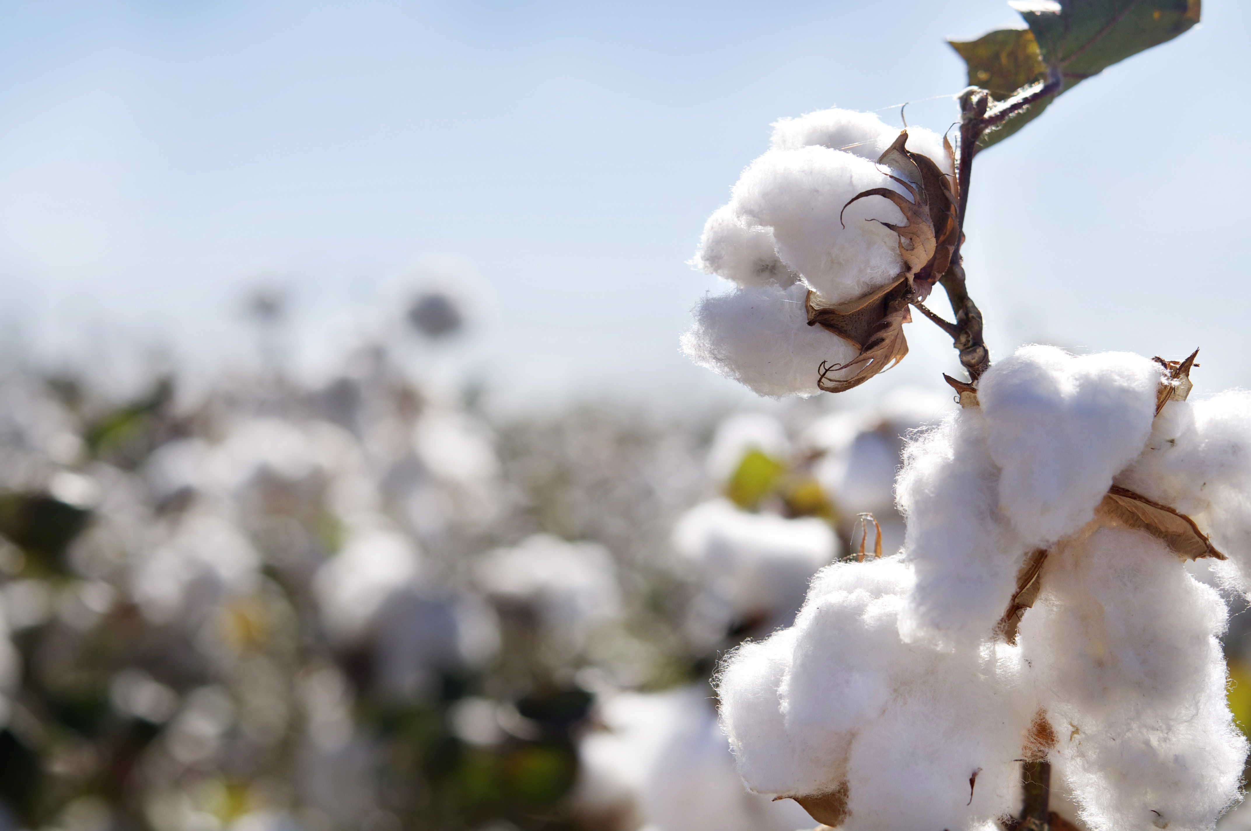 Türkiye İçin 150 Milyar ABD Dolarlık Tarım Ekonomisi Hayal Değil